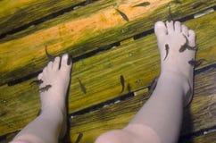 Garra rufa fish and legs Stock Photos