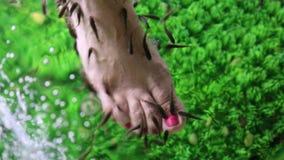 Garra Rufa fishes stock video footage