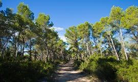 Garraf. Catalonia, Parque Garraf forest trail Royalty Free Stock Images