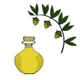 Garrafa de óleo do Jojoba na cor 2 Imagem de Stock Royalty Free