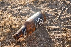 Garrafa de cerveja do caminhante do Firestone em Joshua Tree National Park Foto de Stock Royalty Free