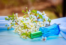 Garrafa de perfume de vidro azul e ramo de florescência da cereja Imagem de Stock Royalty Free
