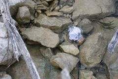 Garrafa de vidro dada forma coração com mensagem para dentro fotografia de stock