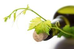Garrafa de vinho e vinha verde Fotos de Stock