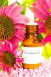 Garrafa do óleo essencial e das flores do Echinacea fotografia de stock royalty free