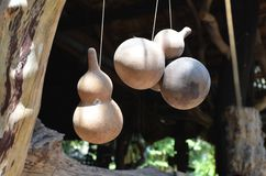 Garrafa natural do fruto erval para decorar o artigo medicalplant fotos de stock royalty free