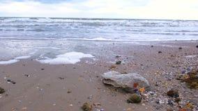 A garrafa plástica entre escudos rapan foi trazida à costa na costa arenosa vídeos de arquivo