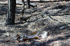 Garrafa quebrada queimada Imagem de Stock