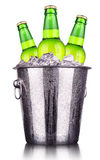 Garrafas de cerveja na cubeta de gelo isolada fotografia de stock royalty free