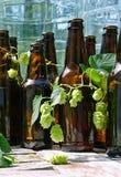 Garrafas de cerveja sem etiqueta com lúpulos imagens de stock