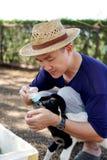 Garrafas de leite de alimentação do homem asiático para carneiros na exploração agrícola fotografia de stock royalty free