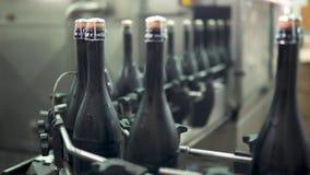Garrafas de vinho espumante na máquina de engarrafamento do transporte ou da água na adega video estoque