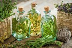 Garrafas do tomilho e do óleo essencial ou da infusão dos alecrins, Imagens de Stock Royalty Free
