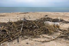 Garrafas e juncos plásticos na areia Costa de mar Lixo na praia Poluição ambiental imagens de stock
