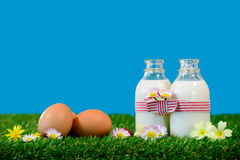 garrafas pequenas do leite e dos ovos na grama Imagens de Stock Royalty Free