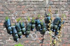 Garrafas plásticas recicladas usadas como um plantador imagens de stock