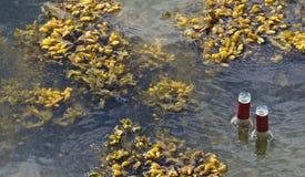 Garrafas vazias que nadam entre a alga vesicular negra foto de stock royalty free