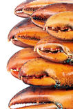Garras da lagosta Fotografia de Stock