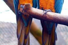 Garras de los Macaws Fotografía de archivo libre de regalías