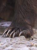 Garras de um urso Foto de Stock