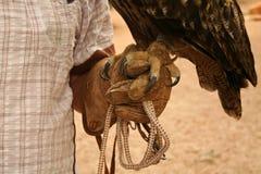 Garras de un búho de águila Fotografía de archivo libre de regalías