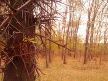 garras del árbol Fotografía de archivo libre de regalías