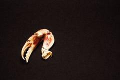 Garras del cangrejo Imágenes de archivo libres de regalías