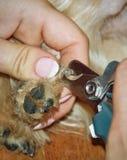 Garras del perro del ajuste Fotografía de archivo libre de regalías