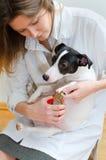 Garras del perro del corte de la mujer Imágenes de archivo libres de regalías