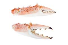 Garras do caranguejo azul, isoladas no fundo branco Imagem de Stock