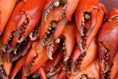 Garras vermelhas do caranguejo Fotografia de Stock
