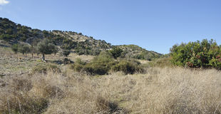Garrigue Habitat Royalty Free Stock Photography