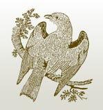 Garrula de coracias de rouleau européen se reposant sur une branche répandant ses ailes Photos stock