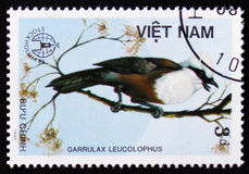 MOSCOW, RUSSIA - FEBRUARY 12, 2017: A stamp printed in Vietnam shows Garrulax leucolophus or white-crested laughingthrush, series. Devoted to the birds, circa stock photography
