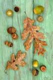 Garry Oak-Blätter und -eicheln Stockfoto