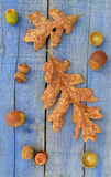 Garry Oak leaves and acorns Royalty Free Stock Photography