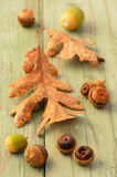 Garry Oak leaves and acorns Royalty Free Stock Images