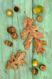 Garry Oak leaves and acorns Stock Photo