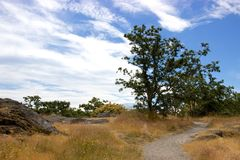 Garry oak tree and meadow, Victoria, British Columbia, Canada. A pathway through a Garry oak meadow in Victoria, British Columbia's Beacon Hill Park. The Garry Stock Photo