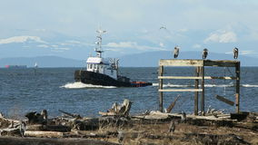 Garry Point Herons and Tugboat stock video