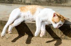 Łgarski kot Obrazy Royalty Free