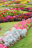 Garten Stockbild