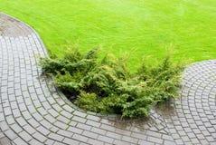 Garten Stockfotografie