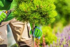Garten-Baum-Beschneidung stockfoto