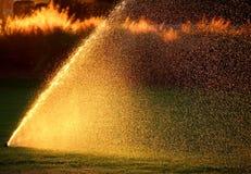 Garten-Berieselungsanlagen auf Sonnenuntergang Stockfotografie