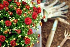 Garten blüht bereites zu pflanzen und Gärtnerwerkzeuge und -handschuhe Lizenzfreie Stockfotos