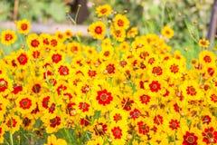 Garten blüht in voller Blüte Stockbild