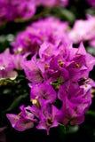 Garten-Blume Stockfotografie