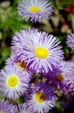Garten-Blumen Lizenzfreies Stockfoto