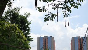 Garten-Blumen-Name peruanischer Zinnia stockfotografie